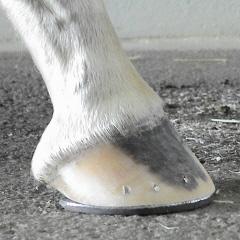 the shod hoof view