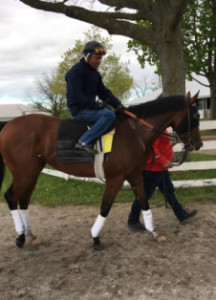 Irap after training