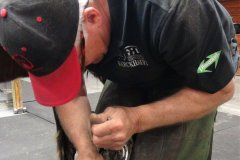 6-Using-the-Diamond-Farrier-USA-crease-nail-puller-each-nail-is-pulled-individually-to-avoid-damaging-the-wall.